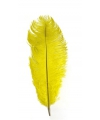 Gele zwarte piet struisveer 35 cm