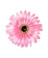Haarbloem gerbera roze