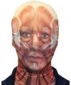 Halloween morphsuit masker gezicht met spieren